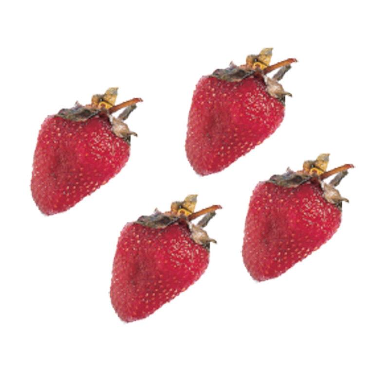 Fraise Confite glace (Erdbeeren glasiert) | Artikelnummer: LI17518